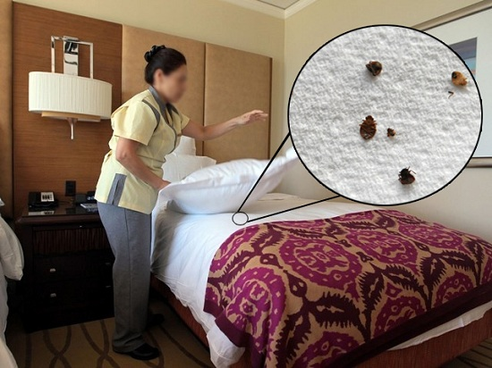 How to Prevent Bed Bugs in Hotels?